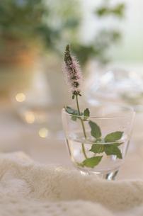 水が入ったグラスに生けられたミントの花とハーブの写真素材 [FYI03352132]
