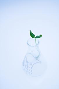 キューリの新芽とフラスコの写真素材 [FYI03352166]