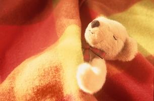 寝るクマのぬいぐるみの写真素材 [FYI03353050]