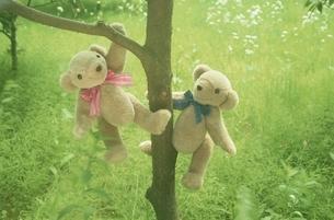 木にぶら下がる2体のクマのぬいぐるみの写真素材 [FYI03353052]