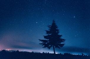 星空と木のシルエット 妙高 新潟県の写真素材 [FYI03353079]