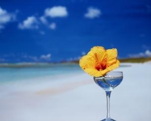 海辺のグラスとハイビスカスの写真素材 [FYI03353211]