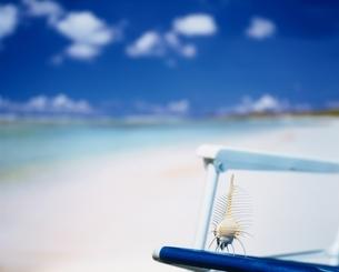 海辺のホネガイの貝殻の置き物の写真素材 [FYI03353215]