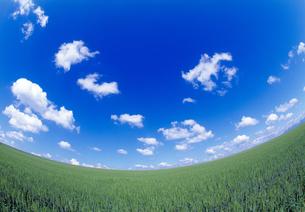 麦畑と青空の写真素材 [FYI03353222]
