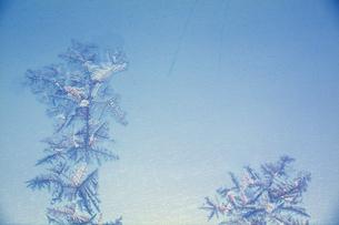 氷の結晶の写真素材 [FYI03353227]