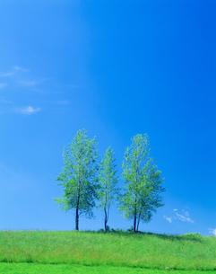 青空と木の写真素材 [FYI03353228]