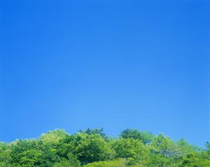 新緑と青空の写真素材 [FYI03353229]