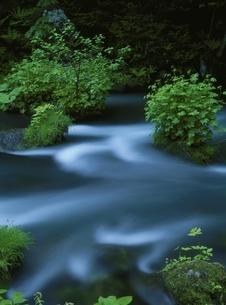 奥入瀬渓流の流れ 青森県の写真素材 [FYI03353442]