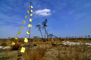 住宅跡地に掲げられた希望の黄色いハンカチの写真素材 [FYI03353704]