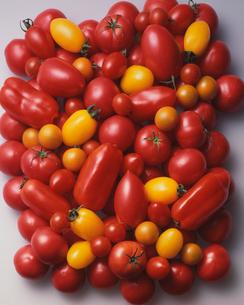 各種トマトの集合の写真素材 [FYI03353971]