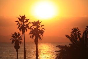 フェニックスのシルエットと夕日の写真素材 [FYI03354014]