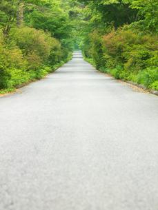 新緑と小道の写真素材 [FYI03354042]
