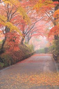 秋雨の中尊寺参道の写真素材 [FYI03354103]