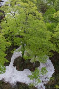 新緑の樹と残雪の写真素材 [FYI03354104]