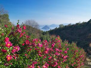 サザンカ咲く王子ヶ岳から望む瀬戸内海の写真素材 [FYI03354152]