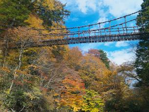 秋の奥祖谷かずら橋の写真素材 [FYI03354191]