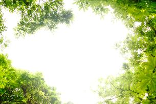 新緑フレームの写真素材 [FYI03354392]