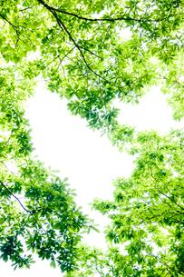 新緑フレームの写真素材 [FYI03354410]