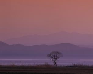 猪苗代湖と木立  福島県の写真素材 [FYI03354507]