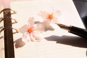 桜の花とビジネス手帳の写真素材 [FYI03354753]