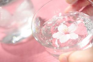 花見の冷酒の写真素材 [FYI03354756]