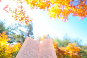 紅葉した木の下での読書の写真素材 [FYI03354850]