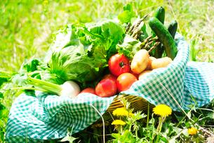 バスケットにはいった春野菜の写真素材 [FYI03354854]