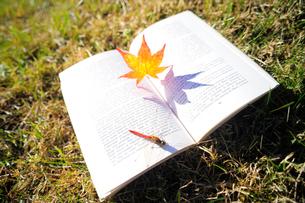 草の上におかれた詩集にとまった赤トンボとカエデの落ち葉の写真素材 [FYI03354867]