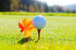 ティーの上にのったゴルフボールともみじの落ち葉の写真素材 [FYI03354877]