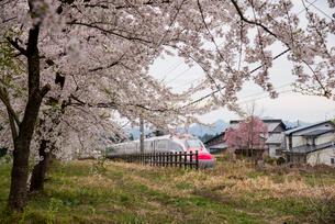 桜並木と秋田新幹線スーパーこまちの写真素材 [FYI03354952]