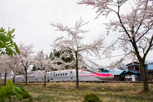 桜並木と秋田新幹線スーパーこまちの写真素材 [FYI03354996]