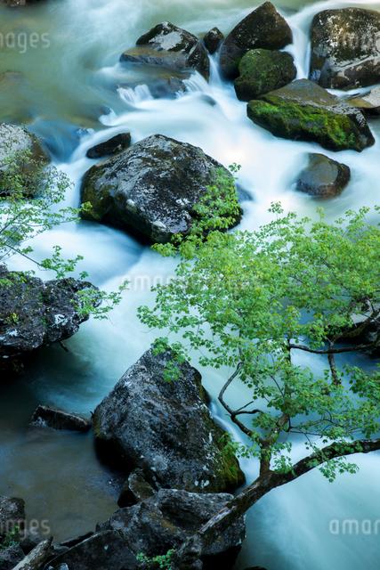 若葉と奈曽川の写真素材 [FYI03355019]