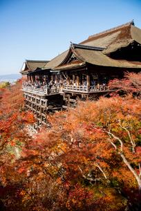 紅葉の清水寺本堂舞台と京都街展望の写真素材 [FYI03355102]