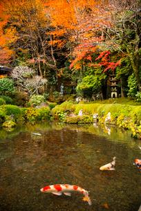秋の寂光院 四方正面の池の写真素材 [FYI03355115]