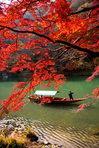 紅葉嵐山と保津川下りの写真素材 [FYI03355127]