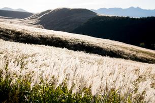 朝日に輝く霧ヶ峰高原ススキ原と八ヶ岳連峰の写真素材 [FYI03355200]