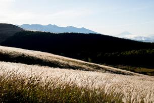 朝日に輝く霧ヶ峰高原ススキ原と八ヶ岳連峰の写真素材 [FYI03355219]