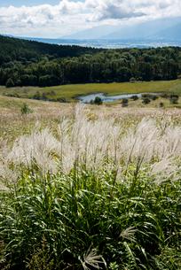 霧ヶ峰高原,ススキ咲く踊場湿原と南アルプスの写真素材 [FYI03355246]