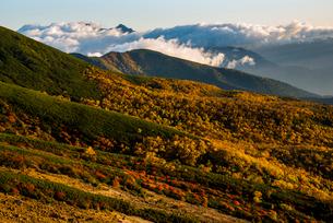 乗鞍山肌紅葉と雲海に浮かぶ北アルプス穂高連峰の写真素材 [FYI03355313]