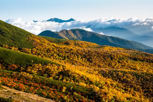 乗鞍より山肌紅葉と雲海に浮かぶ北アルプス穂高連峰の写真素材 [FYI03355338]