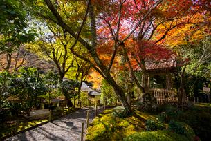 京都大原秋の寂光院の写真素材 [FYI03355461]