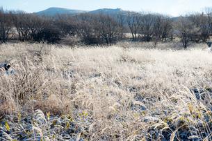 朝日に輝く霜の霧ヶ峰高原の写真素材 [FYI03355529]