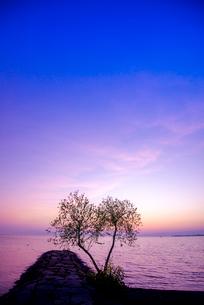 豊公園よりトワイライトの琵琶湖の写真素材 [FYI03355593]