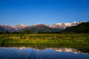 白馬三山と田園風景の写真素材 [FYI03355692]