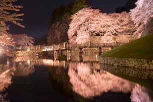 彦根城ライトアップの夜桜 大手門橋 内堀の写真素材 [FYI03356071]