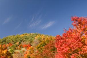 もみじ湖の紅葉したモミジの写真素材 [FYI03356220]