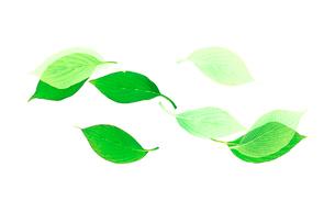 葉のイラスト素材 [FYI03356641]