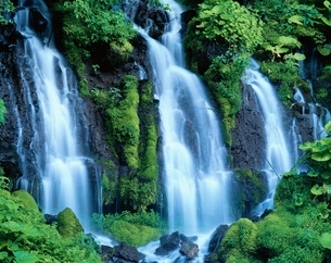 吐龍の滝と苔の岩    京極町 北海道の写真素材 [FYI03356649]