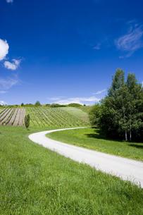 草原の白い道とブドウ畑の写真素材 [FYI03356732]