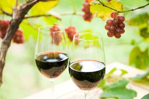 赤ワインとブドウの木と実の写真素材 [FYI03356789]